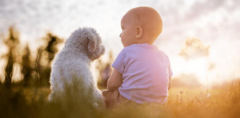 Préparer son chien à l'arrivée de bébé
